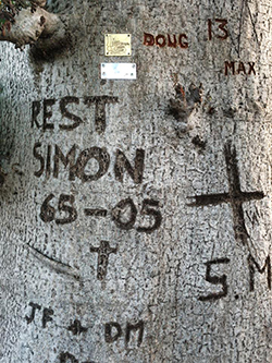 simons tree small